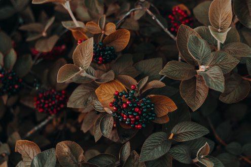 4k-wallpaper-autumn-beautiful-1379640
