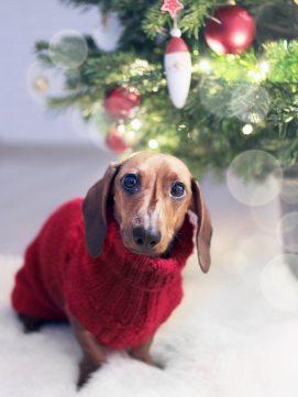 adorable-animal-bokeh-755380