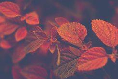autumn-beautiful-branch-772520